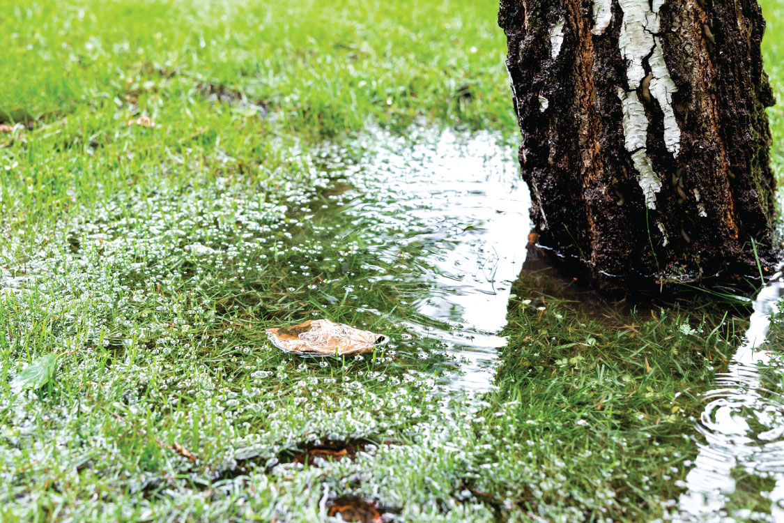 1st-call-drains-what-to-do-about-tree-roots-in-drains